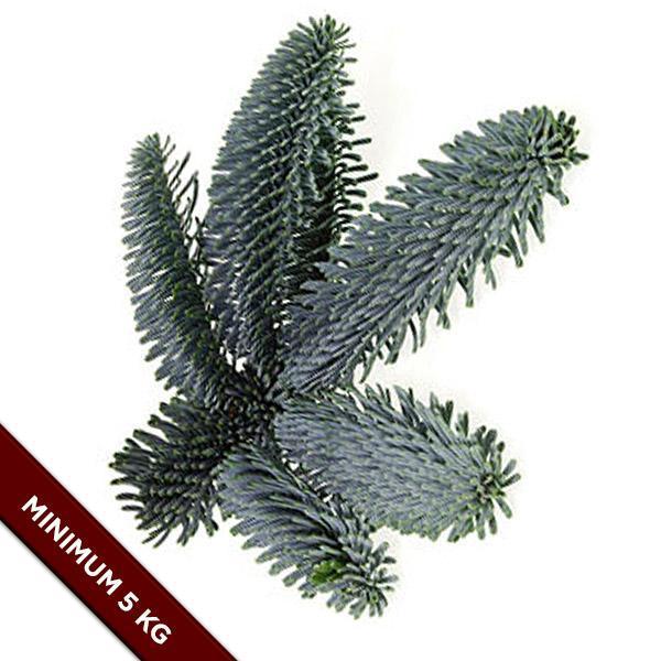 Nobilis grantræ